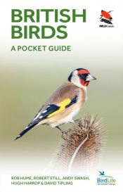 British Birds : A Pocket Guide