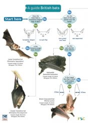 A Guide to British Bats