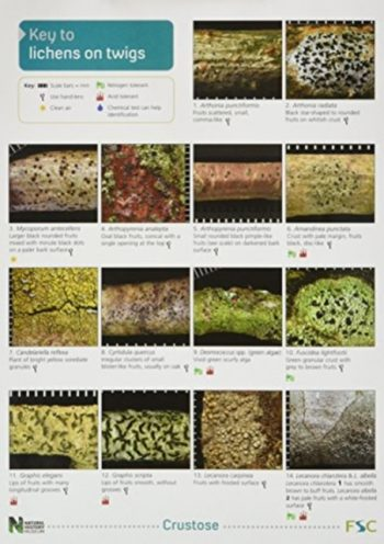 A Key to Lichens on Twigs