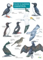 Guide to Summer Coastal Birds