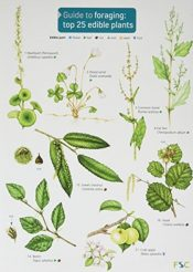 Guide to Foraging: Top 25 Edible Plants